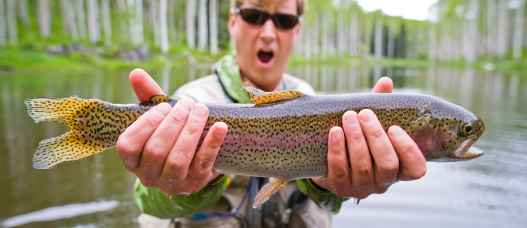 If you love to fish trout, you will never get your fill of fly fishing vacations at our dude ranch - Durango, CO rainbows.